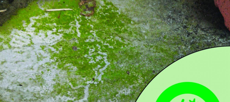 Algae-Resist
